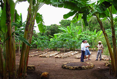 Hacienda Chichen's Organic Fruits and Vegetable Crops are grown with utmost care to be used at the hotel's delicious meals.