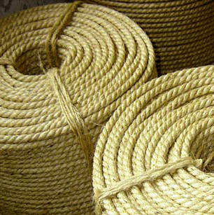 "Yucatan is famous for the production of ropes made with the natural fiver of Agave fourcroydes ""Henequen"""