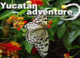 Yucatan Adventure travel guide archives 2009