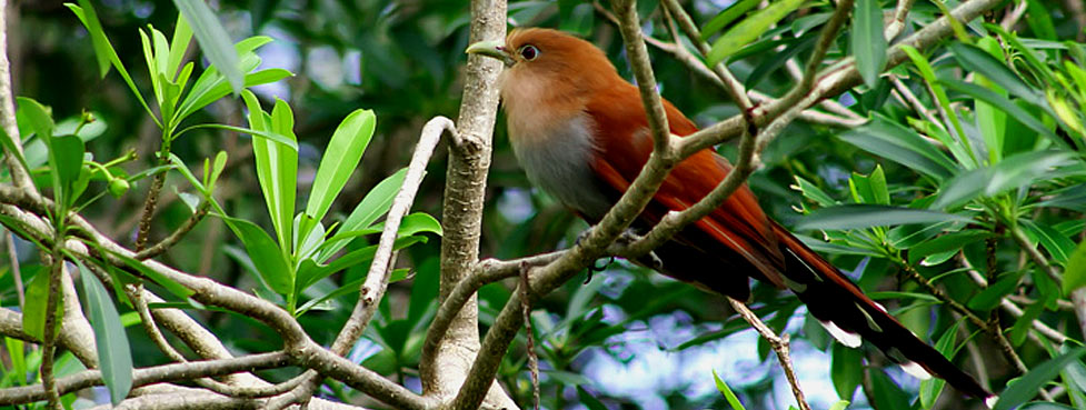 Yucatan's Bird-Watching and Nature Lovers' Dream Eco-Experience at Hacienda Chichen Resort, Chichen Itza, Yucatan, Mexico