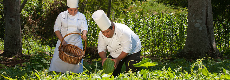 Enjoy Fresh Organic Food, carefully grown at Hacienda Chichen for the perfect gourmet menu choices.