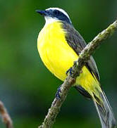 Yucatan Bird-watching Tours at Hacienda Chichen Bird Refuge a mist Chichen Itza Maya pyramids.