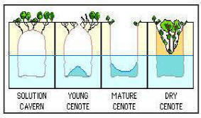 Yucatan's Ecoturism: A Cenotes' formation cycle.