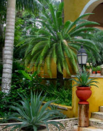 Discover Hacienda Chichen beautiful Flora and Fauna and lush gardens