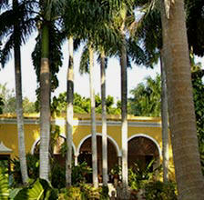 Hacienda Chichen has a fabulous collection of Royal Palms and other exotic flora in its gardens and private Maya Jungle Reserve