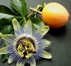 passion fruit and flowers