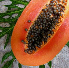 Ripe Mexican Maradol Papaya are grown at Hacienda Chichen's Organic Gardens and served at the hotel
